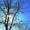 Trời xanh trong tim