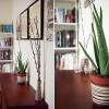 9 loại cây hút khí độc cực tốt cho nhà ở và văn phòng