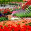 Thăm vườn đầu năm
