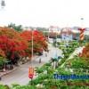 Thăm đường Hoa Phượng Đỏ dài và đẹp nhất Việt Nam
