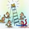 [Câu chuyện lãnh đạo] Câu chuyện 5 con khỉ và 1 nải chuối (The 5 monkeys experiment)