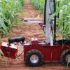 Robot giám sát ngô mới giúp nghiên cứu tác động của biến đổi khí hậu đối với cây lương thực