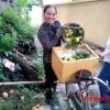 Hải Phòng: Rừng thị trăm tuổi tại Đồ Sơn vào mùa quả chín