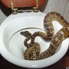 4 mẹo dân gian khiến rắn sẽ không dám bén mảng tới gần nhà bạn