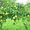 Đời người như bốn mùa, kiên trì đi đến cuối con đường thì ắt hái được quả ngọt