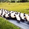 Lựa chọn cuộc sống: Bạn là người có chính kiến hay mãi chạy theo đám đông