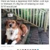Kiếm được cả trăm nghìn USD/năm nhờ nghề đánh gía chó online