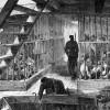 Bài học quản trị – Vận chuyển tù nhân và phương thức trả tiền.