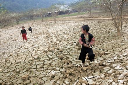 Những tác hại của biến đổi khí hậu