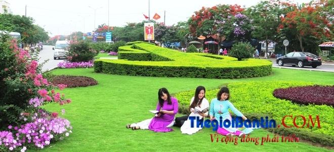 Hoa phuong do Haiphong (4)