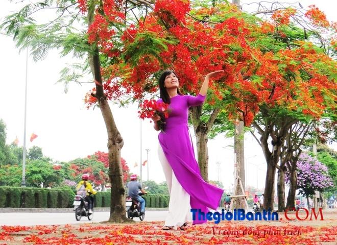 Hoa phuong do Haiphong (6)
