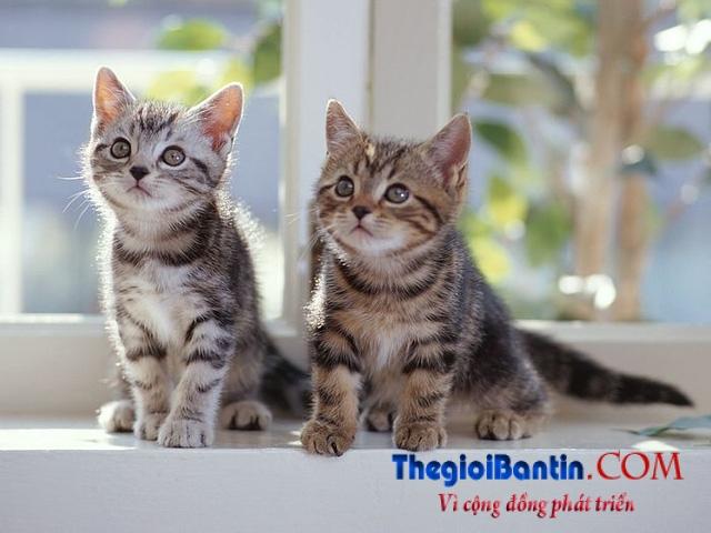 5bwallcoo-com-5d-pussy-cat-wallpaper-02-vol-124-fc187-1477707914556
