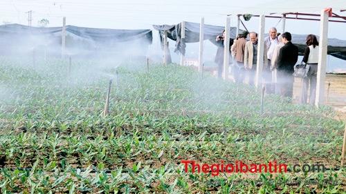 Hướng dẫn làm hệ thống tưới phun sương tự động