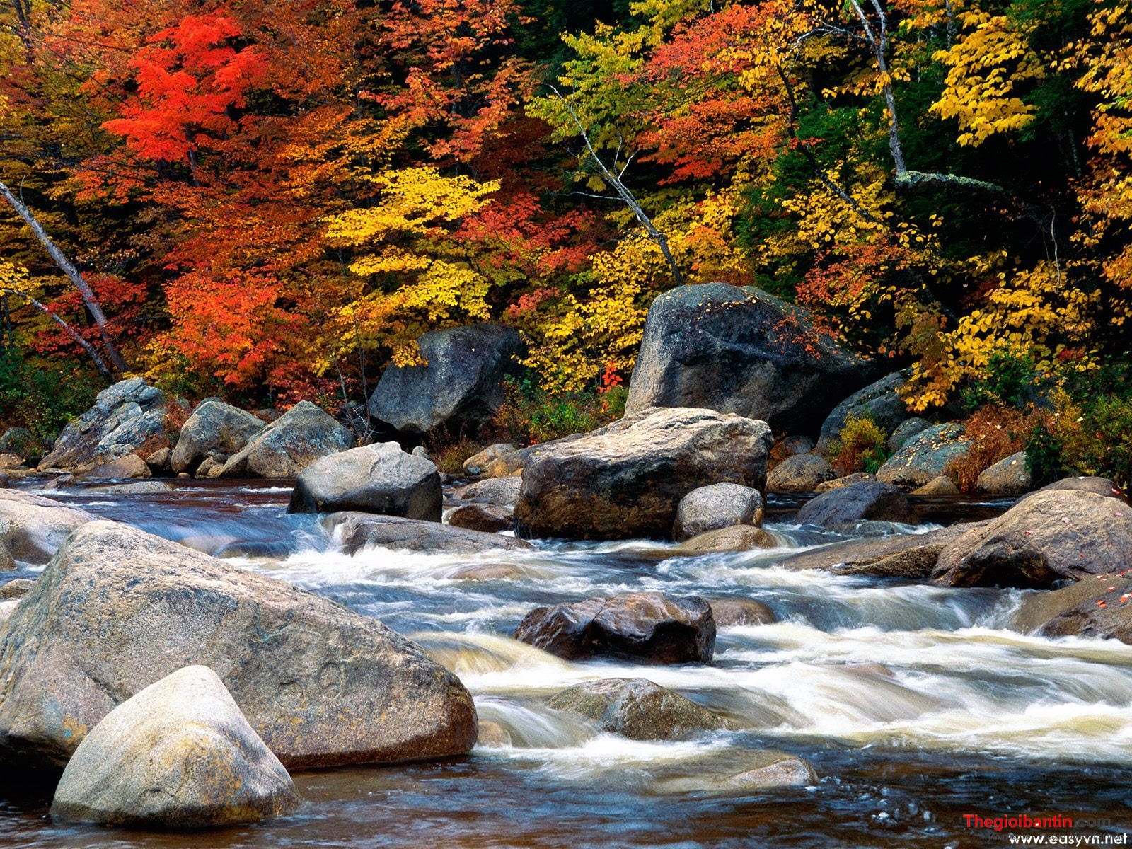 www-easyvn-net-25-rivers-and-creeks-wallpapers-020