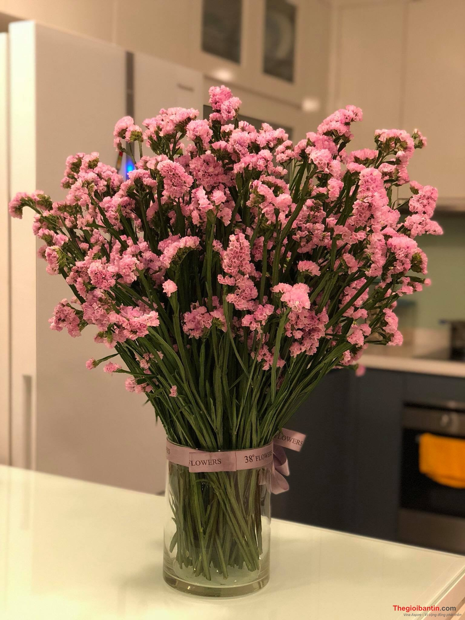 Hoa Salem – Nguồn gốc, đặc điểm và ý nghĩa