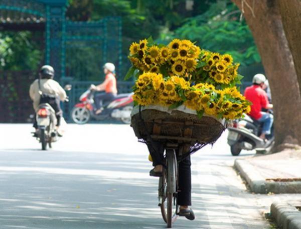 Những mùa hoa đặc trưng theo tháng của Hà Nội