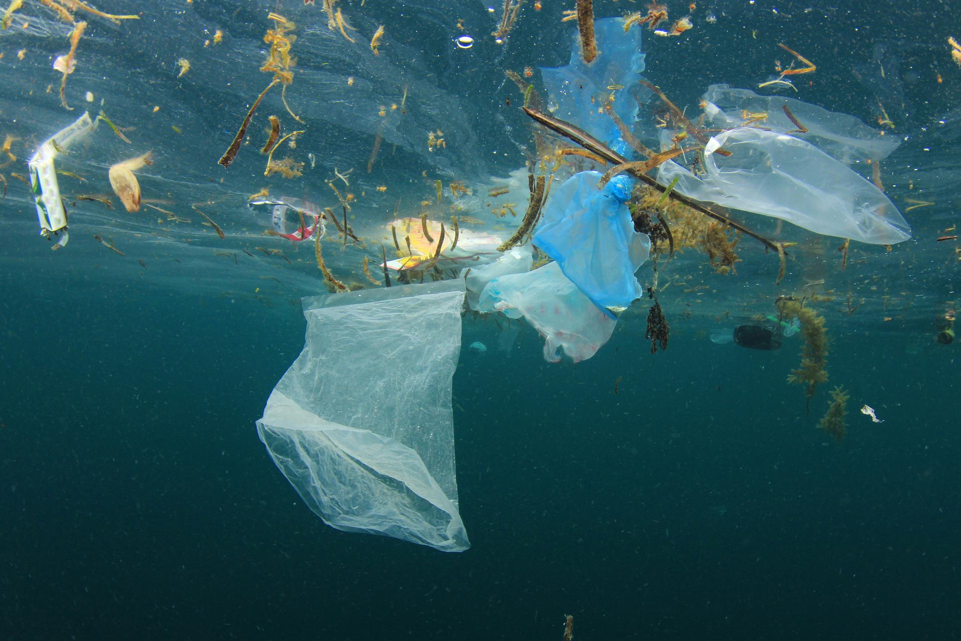 Bạn đang ăn vi nhựa qua chuỗi thức ăn chính của chúng ta ?