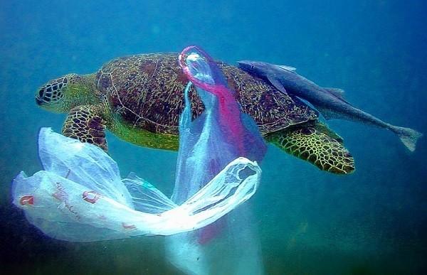 Này ! Hạn chế sử dụng túi nylon & để rác đúng nơi quy định nghe chưa