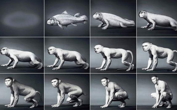 Hành trình 550 triệu năm tiến hóa của loài người qua 60 giây