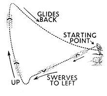 Bumerang một thứ vũ khí độc đáo.