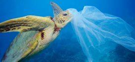 Vì sao hơn 180 loài sinh vật biển sẽ cứ ăn rác thải nhựa tới chết?