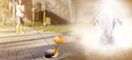 Hãy dắt con ốc sên đi dạo' – Bài học dạy con đầy ý nghĩa Thượng Đế chỉ cho các bà mẹ