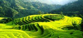 Đẹp ngỡ ngàng ruộng bậc thang Hoàng Su Phì, Hà Giang, Việt Nam
