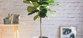 Gợi ý 5 + 1 loại cây cảnh phong thủy trồng trong nhà tốt nhất