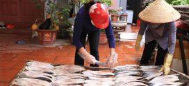 Cá thu một nắng Đồ Sơn: Sản phẩm đặc trưng của người dân miền biển