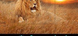 Học Cách Sống Như Sư Tử, Sói và Đại Bàng
